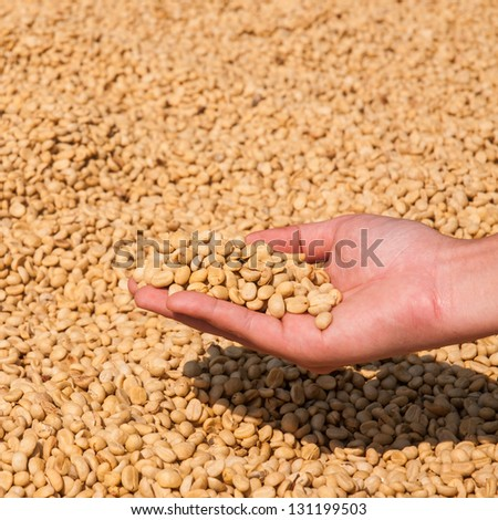 Farmer drying coffee beans in the sun