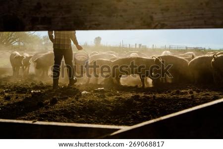 Farmer Feeding Livestock #269068817