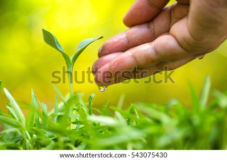 Farmer hand giving water to young plant with sunlight and green nature background