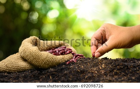farmer hand planting and sowing seed to soil with nut bag and nature green background