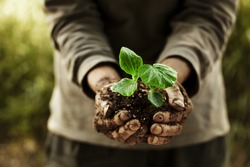 farmer hands holding a planted.