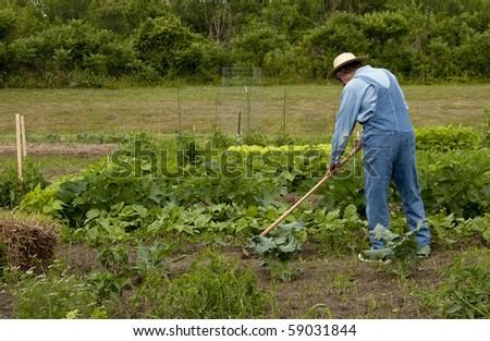 farmer in the garden weeding the plants