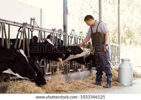 Farmer is catching the head of a cow. On his farm he loves cows.