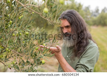 Farmer observing olive on plant in farm #680504134