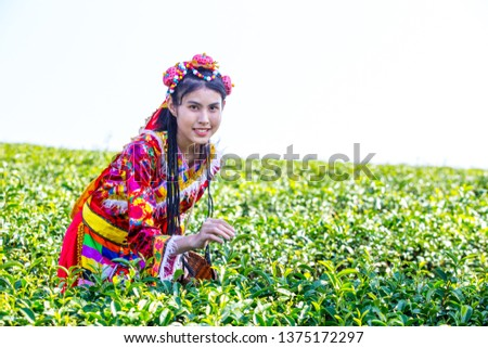 76d0ad2dd Farmer picking tea leave in the terraced tea fields. woman collecting some  green tea leaf