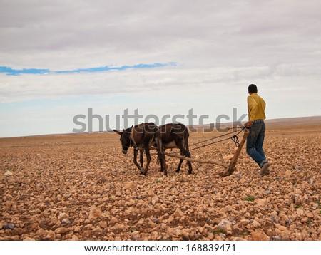 Farmer plowing the earth on donkeys