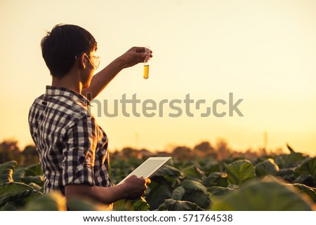 Farmer researching plant in tobacco farm. Agriculture and scientist concept.