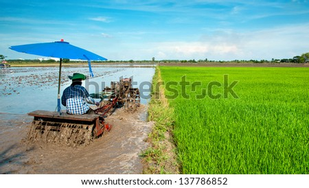 farmer ride rice tractor for preparing the ground for rice plantation.