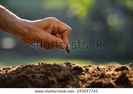 Farmer\'s hand planting a seed in soil
