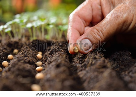 Farmer\'s hand planting seed in soil