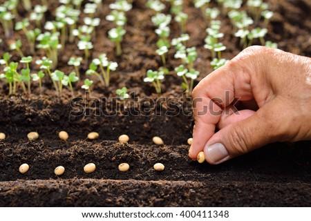 Farmer\'s hand planting seeds in soil