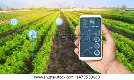 Farmer's holds a smartphone on a background of a field with a carrot plantations. Agricultural startup. Automation and crop quality improvement. High technology, innovation. Scientific research. #1473530663