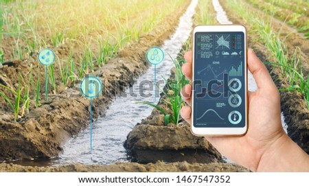 Farmer's holds a smartphone on a background of a field with a leek plantation. Agricultural startup. Automation and crop quality improvement. High technology, innovation. Scientific research. Pomology #1467547352