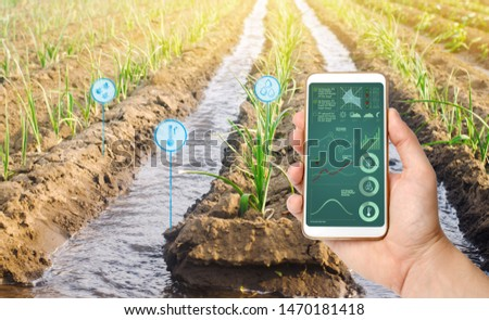 Farmer's holds a smartphone on a background of a field with a leek plantation. Agricultural startup. Automation and crop quality improvement. High technology, innovation. Scientific research. Pomology #1470181418