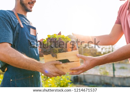 Farmer selling his organic produce on a sunny day. Farmer giving box of veg to customer on a sunny day. Local farmer talks with customer at farmers' market