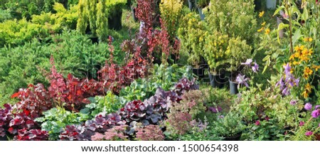 Farmer sells self-grown  decorative  garden  evergreen plants and simple flowers  in a green meadow. Sunny September day landscape