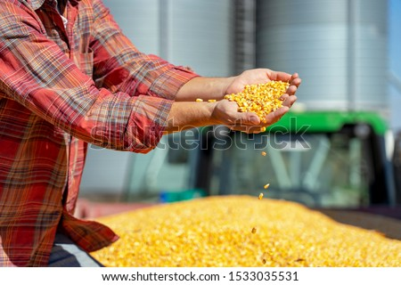 Photo of  Farmer Showing Freshly Harvested Corn Maize Grains Against Grain Silo. Farmer's Hands Holding Harvested Grain Corn. Farmer with Corn Kernels in His Hands Sitting in Trailer Full of Corn Seeds.