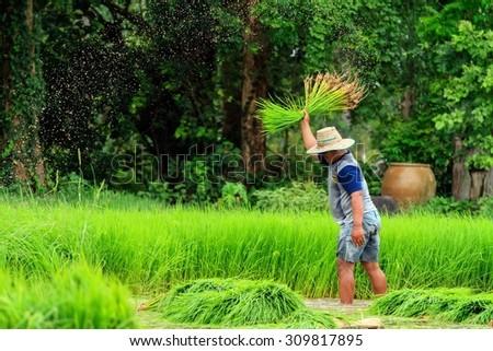 farmer -slow life in asian