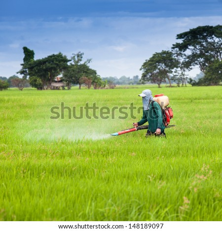 Farmer spray the fertilizer in green rice field - stock photo