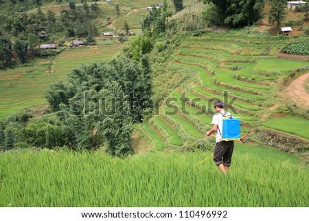 Farmer spraying pesticide on the terraced rice fields on the hill in Sapa, vietnam