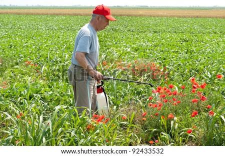 farmer spraying soybean field - stock photo