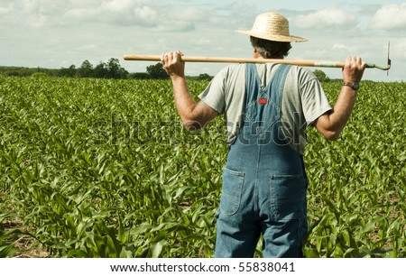 farmer standing in a corn field contemplating the job ahead - stock photo