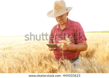 Farmer standing in a wheat field and looking at tablet. #444503623