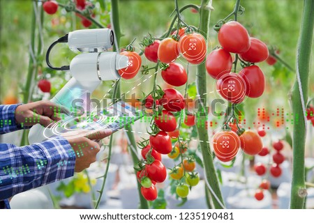 Farmer using digital tablet control robot to harvesting tomatoes in agriculture industry, Agriculture technology smart farm concept #1235190481