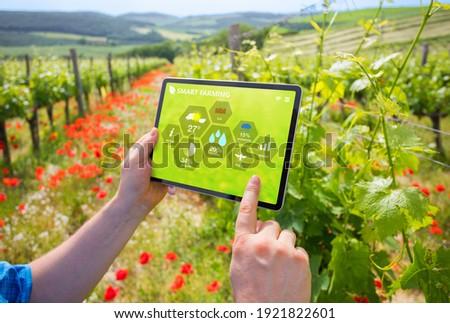 Farmer using smart farming technologies in a vineyard. Stock fotó ©