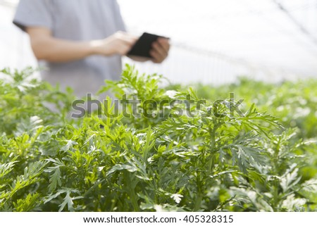 farmer using the tablet in the greenhouse