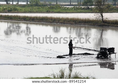 farmer using tractor in rice field.
