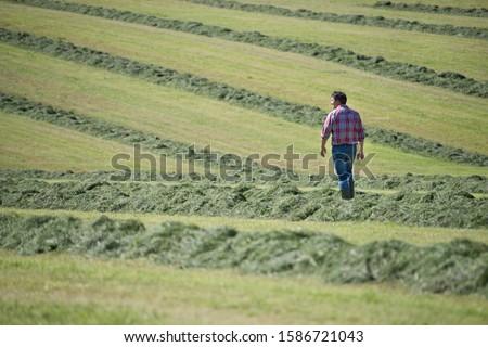 Farmer walking in field of cut grass silage crop