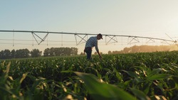 Farmer, walking through a young cornfield, inspecting the growth at sunset, in the background a circular irrigation system.