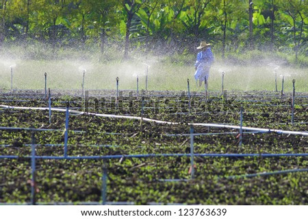 farmer ware wet protection suit walking in sprout field that  irrigated with sprinklers