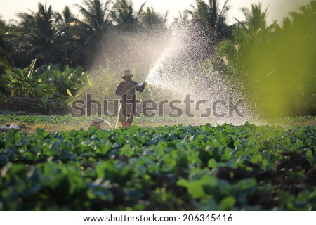 Farmer watering vegetable with rubber tube in Thailand countryside.