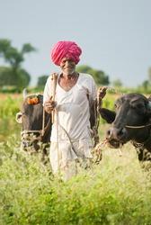 Farmer with buffalo & ox in rural village Salunkwadi, Beed, Maharashtra, India