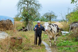 Farmer with cows on a green field