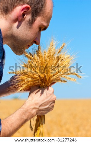 Farmer with ears in wheat field checking his harvest