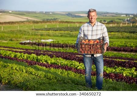 Farmer With Organic Tomato Crop On Farm #340650272