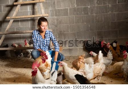 Farmer woman feeding chikens in a hen house #1501356548