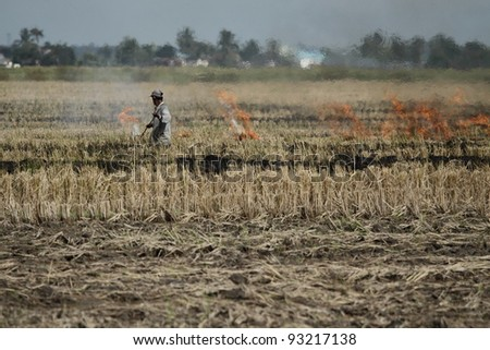 Farmer working in paddy field at Sekinchan, Malaysia.