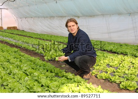 Farmer working in the greenhouse