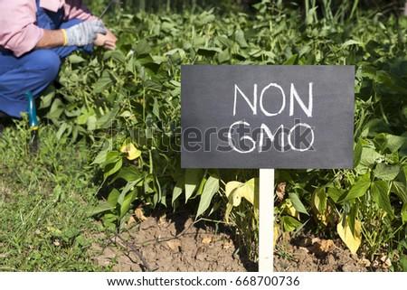 Farmer working in the non-GMO vegetable garden #668700736
