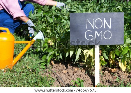 Farmer working in the non-GMO vegetable garden #746569675