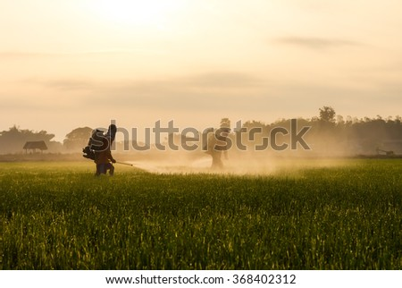Farmers are spraying the leaves with liquid fertilizer sprayed onto the seedlings to spread green space.