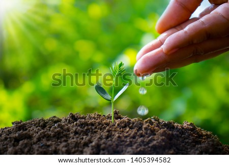 Farmers are watering small plants by hand with the concept of World Environment Day. #1405394582