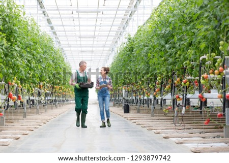 Farmers discussing while walking amidst plants in greenhouse Foto stock ©