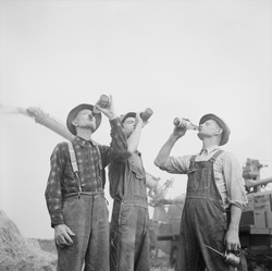 Farmers drinking beer during fall harvest in Jackson, Michigan. Fall 1941. In the background is a potentially dangerous harvesting machine, that requires alert workers.