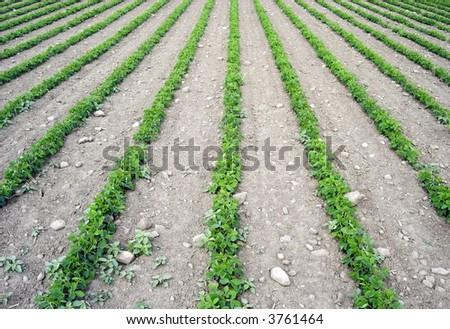 farmers field horizontal - stock photo