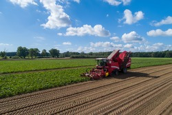 Farmers harvest sugar beet in a country field. Sugar beet harvest with a Sugarbeet harvester an agricultural machine.